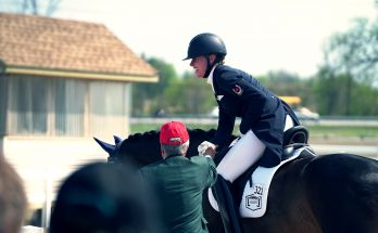 tilskud til heste